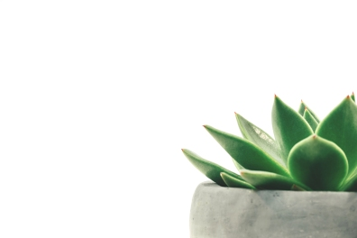 Julie+Ray+succulent+header